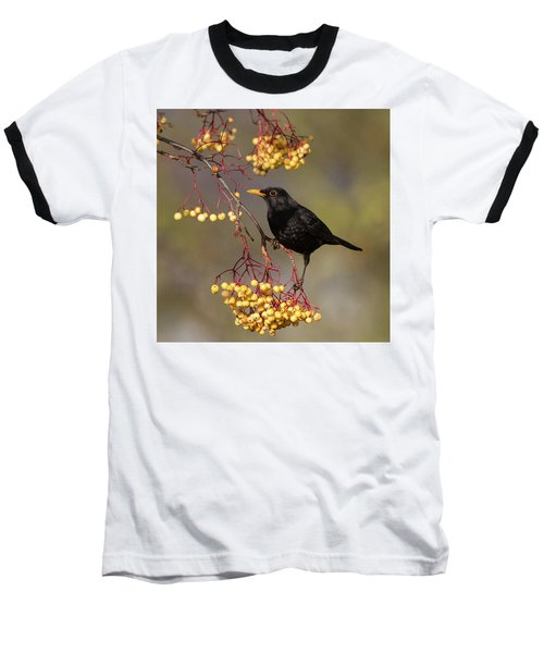 Blackbird Yellow Berries Baseball T-Shirt