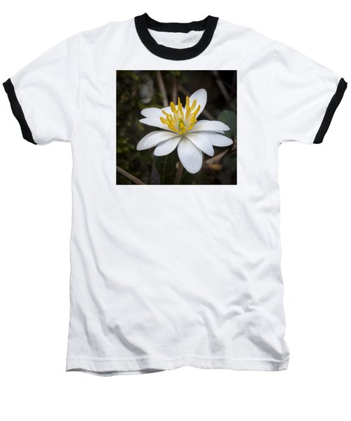 Bloodroot Baseball T-Shirt by Tyson and Kathy Smith