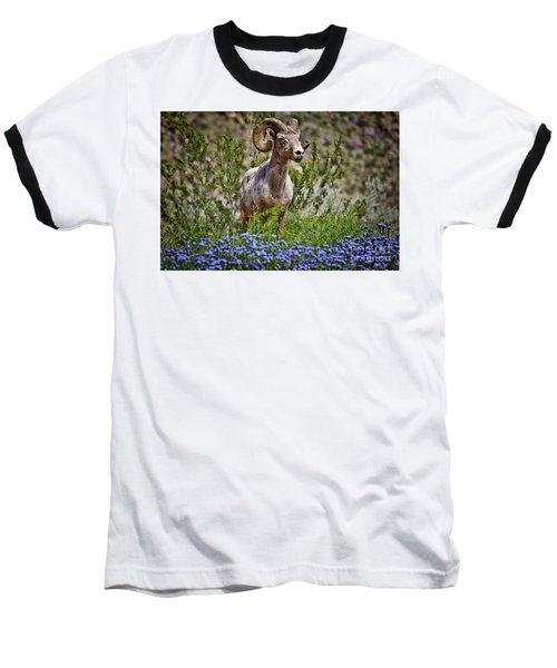 Blooms And Bighorn In Anza Borrego Desert State Park  Baseball T-Shirt