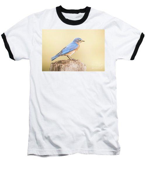 Bluebird On Fence Post Baseball T-Shirt by Robert Frederick