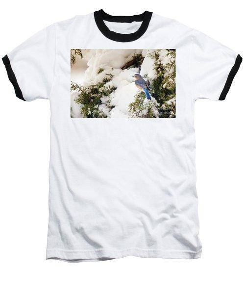 Baseball T-Shirt featuring the photograph Bluebird On Snow-laden Cedar by Robert Frederick