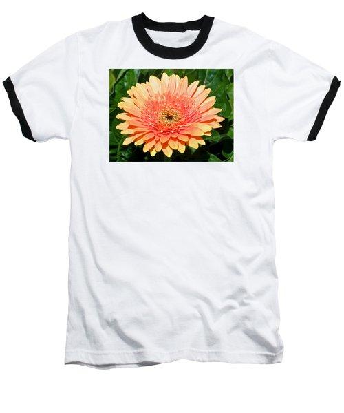 Blushing Zinnia Baseball T-Shirt