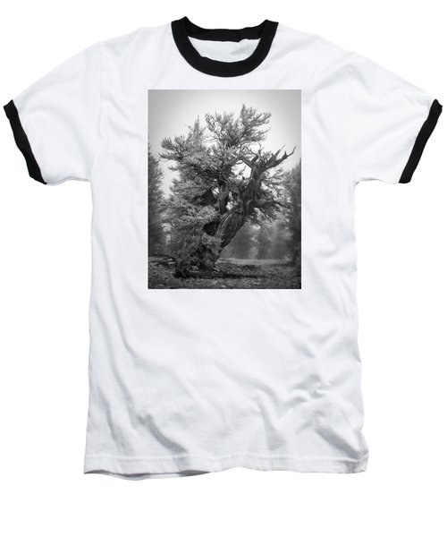 Bristlecone Beauty Baseball T-Shirt