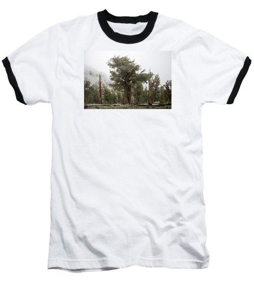 Bristlecone Elder Baseball T-Shirt