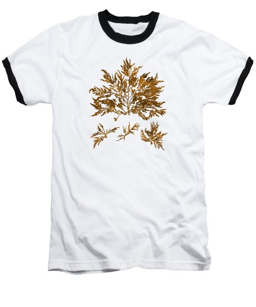 Baseball T-Shirt featuring the mixed media Brown Seaweed Marine Art Chylocladia Clavellosa by Christina Rollo