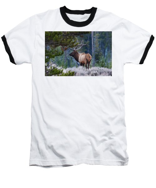 Bull Elk In Forest Baseball T-Shirt