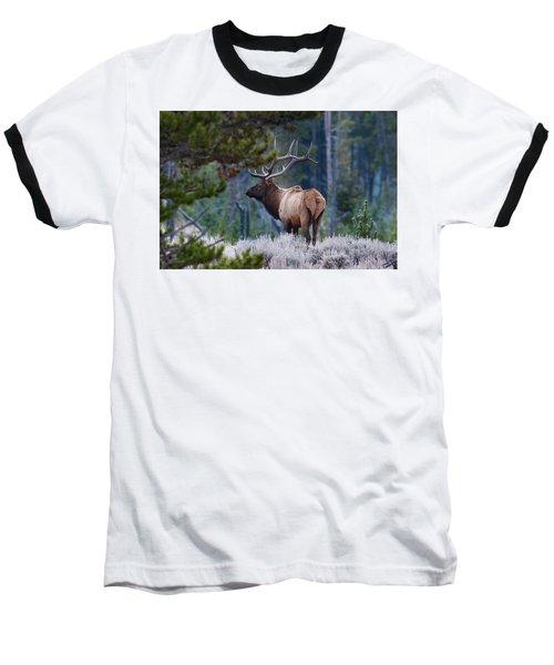 Bull Elk In Forest Baseball T-Shirt
