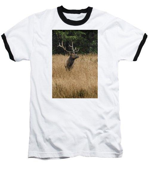 Bull Elk In Yellowstone Baseball T-Shirt