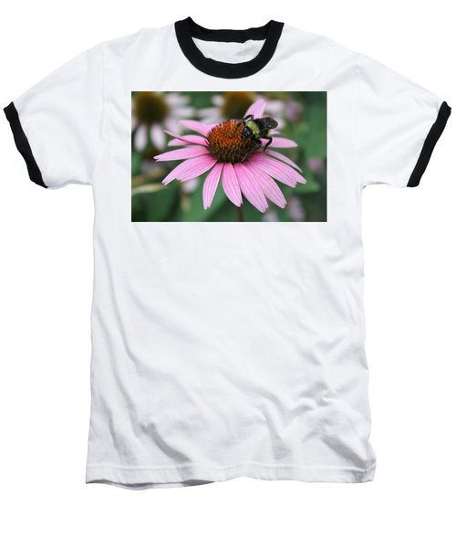 Bumble Bee On Pink Cone Flower Baseball T-Shirt by Sheila Brown