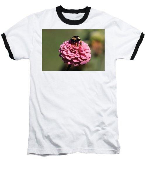 Bumble Bee On Zinnia 2649 Baseball T-Shirt