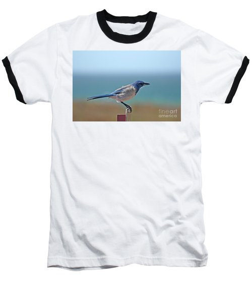 California Scrub Jay Baseball T-Shirt