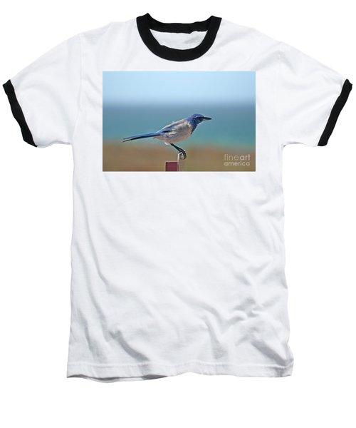 California Scrub Jay Baseball T-Shirt