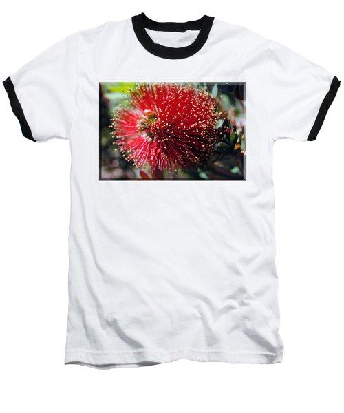 Callistemon - Bottle Brush T-shirt 5 Baseball T-Shirt by Isam Awad