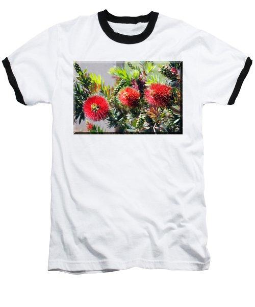 Callistemon - Bottle Brush T-shirt 6 Baseball T-Shirt by Isam Awad