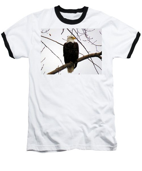 Cape Eagle Baseball T-Shirt