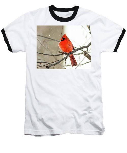 Cardinal In The Snow Baseball T-Shirt by Ursula Lawrence
