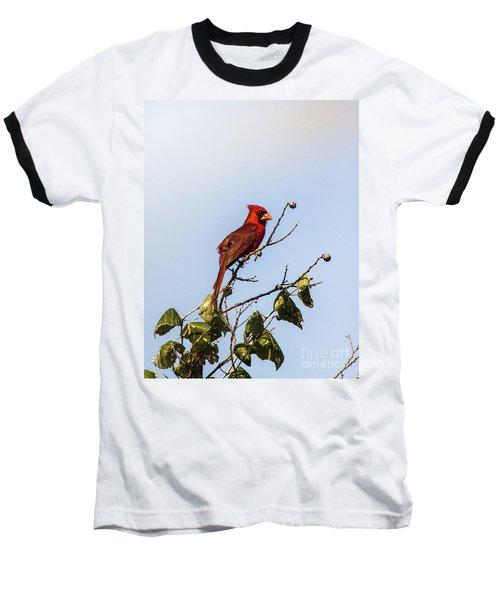 Cardinal On Treetop Baseball T-Shirt by Robert Frederick
