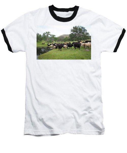 Cattle Baseball T-Shirt by Diane Bohna