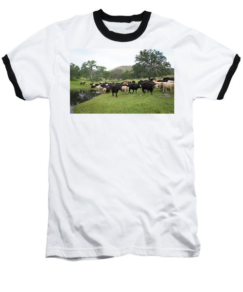 Cattle Baseball T-Shirt