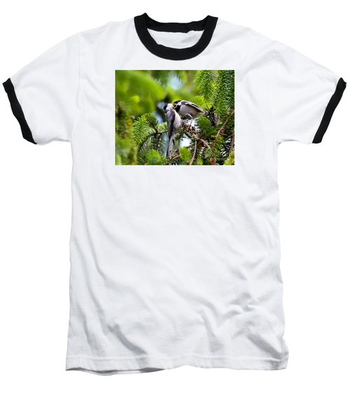 Chickadee Feeding Time Baseball T-Shirt by Kerri Farley
