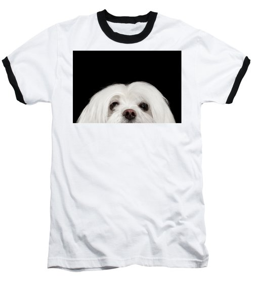 Closeup Nosey White Maltese Dog Looking In Camera Isolated On Black Background Baseball T-Shirt