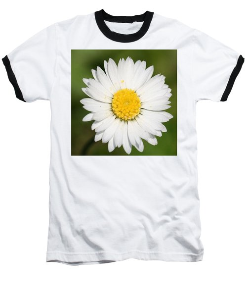 Closeup Of A Beautiful Yellow And White Daisy Flower Baseball T-Shirt