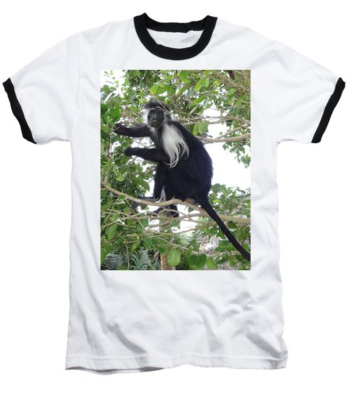 Colobus Monkey Eating Leaves In A Tree Baseball T-Shirt
