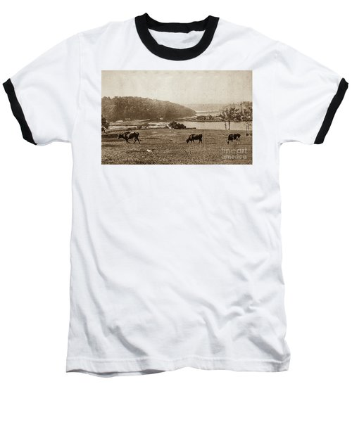 Baseball T-Shirt featuring the photograph Cows On Baker Field by Cole Thompson