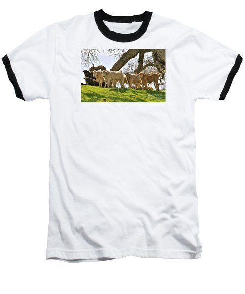 Cows Under Oak #2 Baseball T-Shirt by Amy Fearn