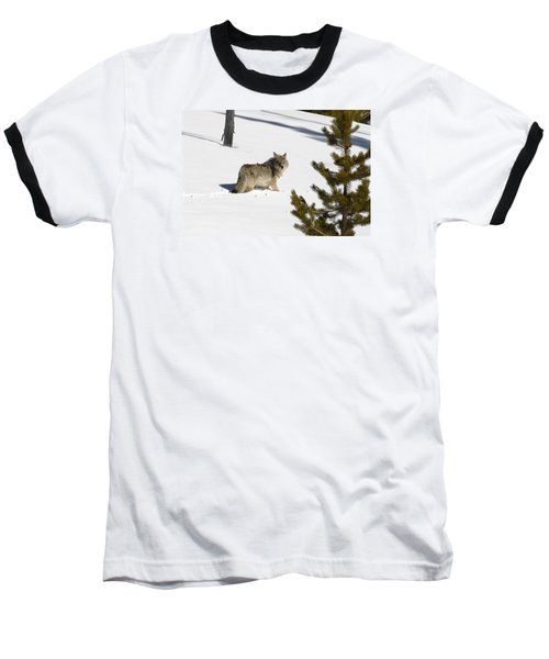 Coyote In Winter Baseball T-Shirt