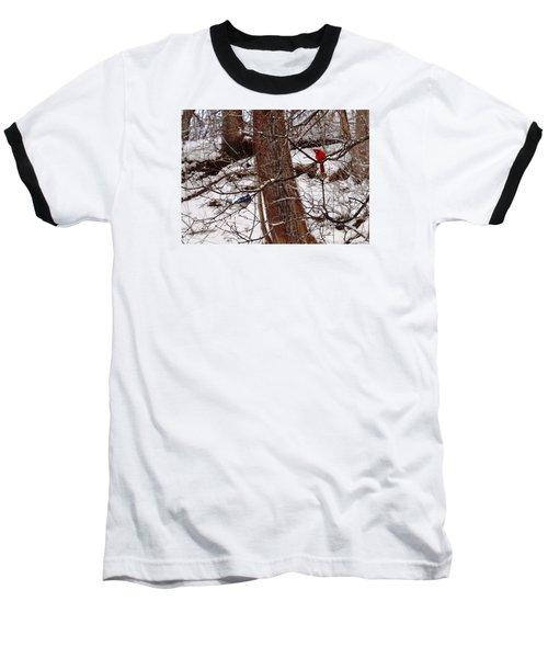 Curious Cardinal Baseball T-Shirt