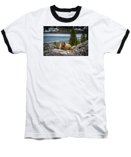 Curious Marmot Baseball T-Shirt