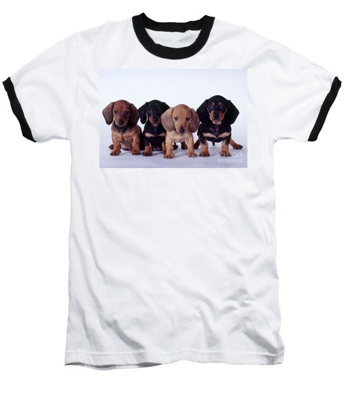 Dachshund Puppies  Baseball T-Shirt