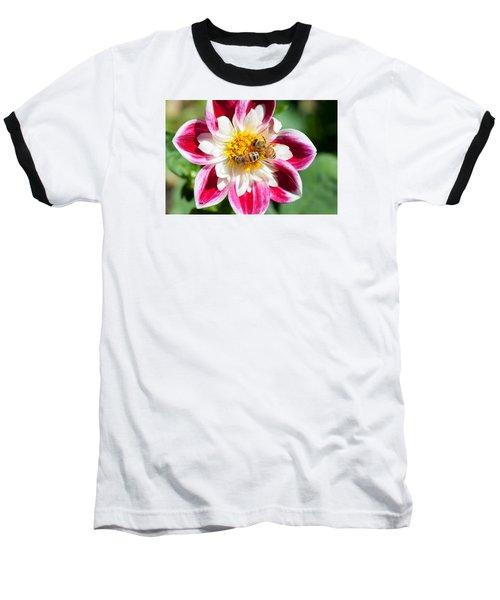 Dahlia Bee Buffet Baseball T-Shirt