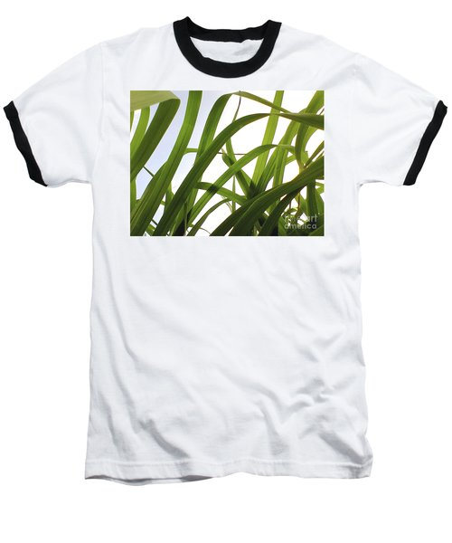 Dancing Bamboo Baseball T-Shirt by Rebecca Harman