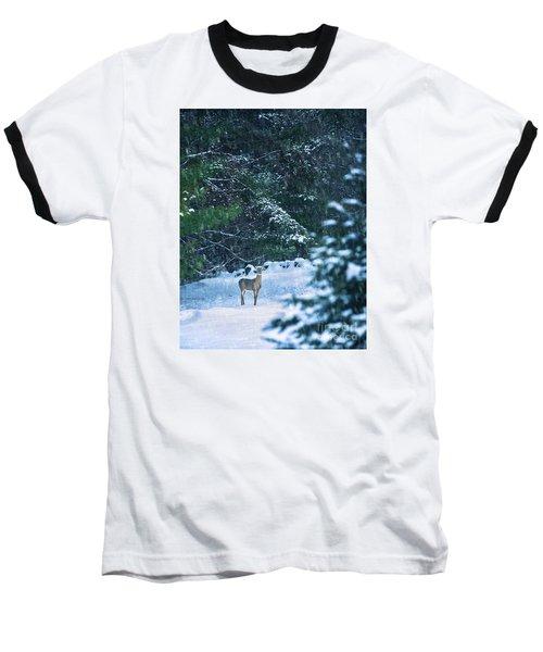 Deer In A Snowy Glade Baseball T-Shirt by Diane Diederich