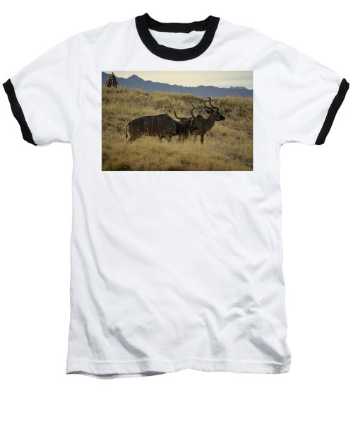 Desert Palm Landscape Baseball T-Shirt by Guy Hoffman
