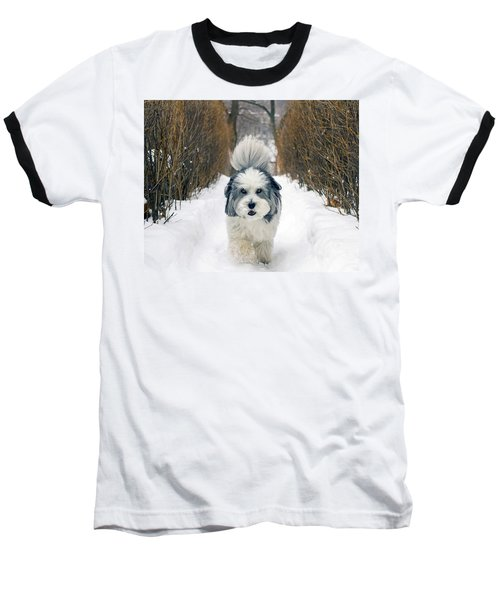 Baseball T-Shirt featuring the photograph Doing The Dog Walk by Keith Armstrong