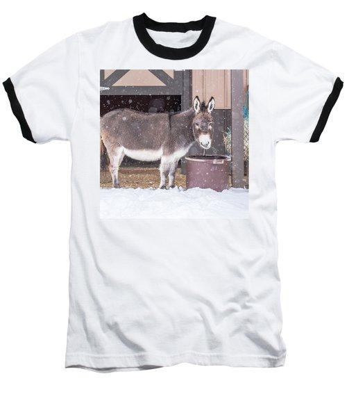 Donkey Watching It Snow Baseball T-Shirt