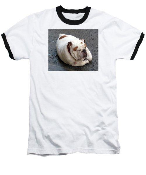 Eduardo Of Firenze Dog Baseball T-Shirt by Lisa Boyd