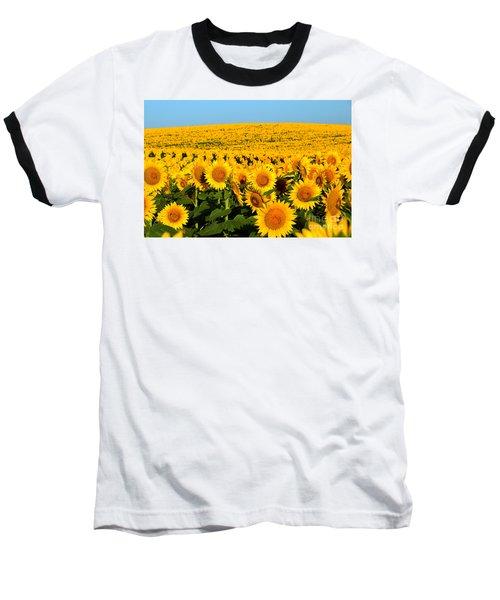 Endless Sunflowers Baseball T-Shirt by Catherine Sherman