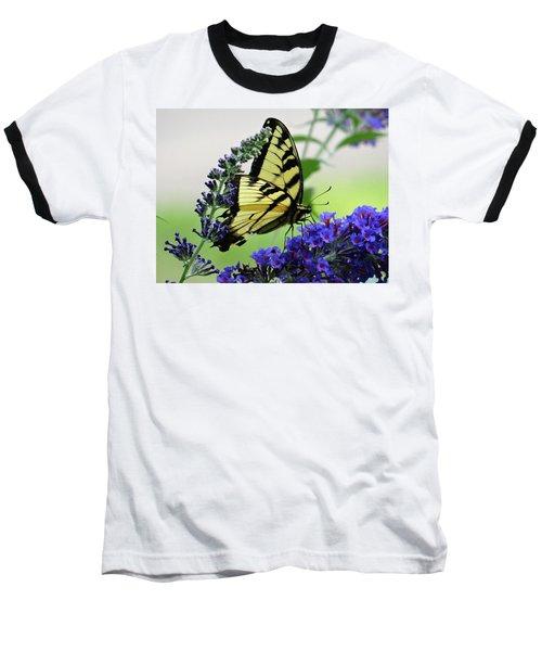 Feeding From A Nectar Plant Baseball T-Shirt