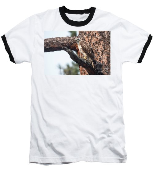 Ferruginous Hawk Baseball T-Shirt
