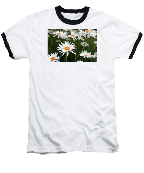 Field Of Daisies Baseball T-Shirt by Dorothy Cunningham