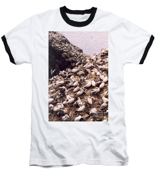 Gannet Cliffs Baseball T-Shirt by Mary Mikawoz