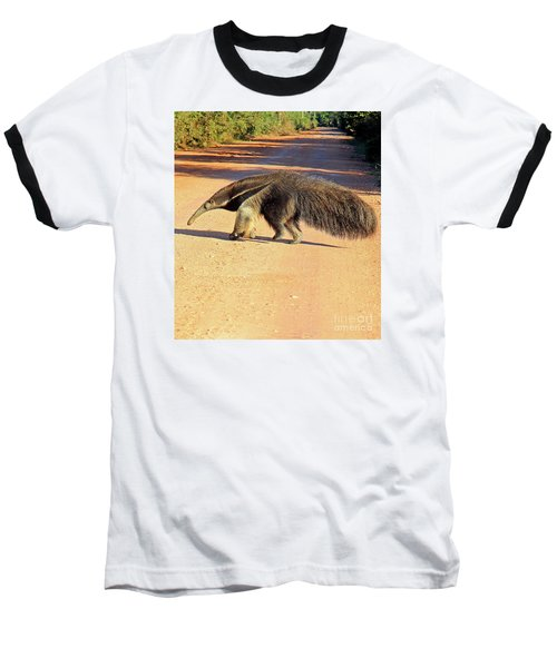 Giant Anteater Crosses The Transpantaneira Highway In Brazil Baseball T-Shirt by Nareeta Martin