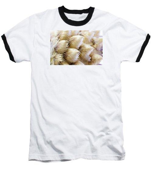 Globe Cornflower Seed Heads - Macro Baseball T-Shirt by Sandra Foster