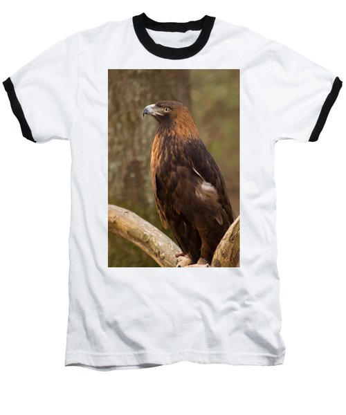 Golden Eagle Resting On A Branch Baseball T-Shirt by Chris Flees