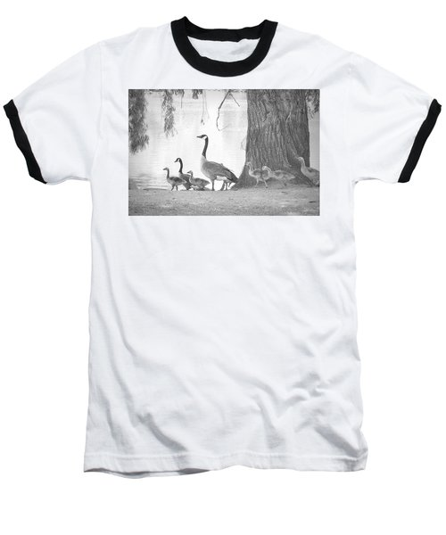 Goose Family  Baseball T-Shirt by Clarice Lakota