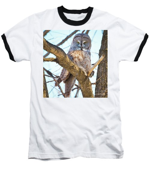 Great Gray Owl Baseball T-Shirt by Ricky L Jones